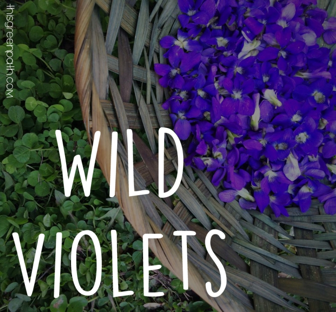 wild violets cover photo